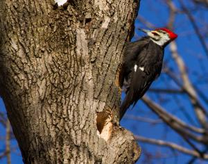 Day of the Woodpecker